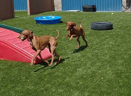 Pet Yard