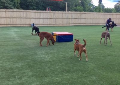 Pet Yard 2